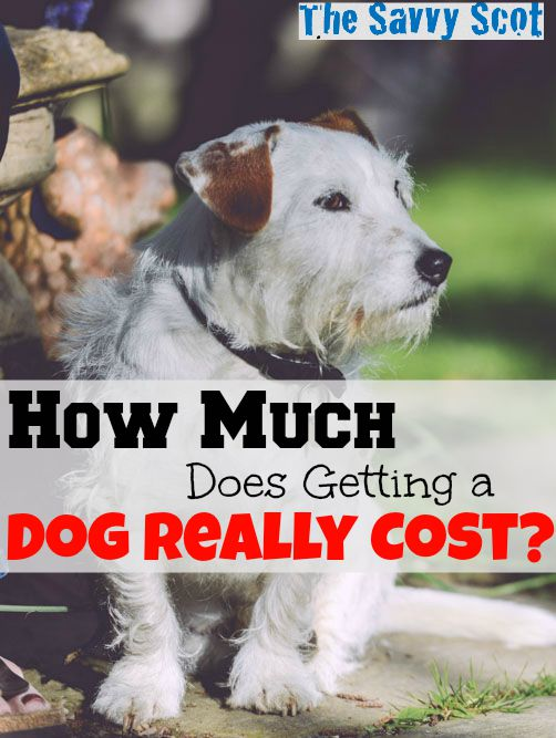 How Much Does Getting a Dog Really Cost