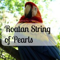 Roatan String of Pearls
